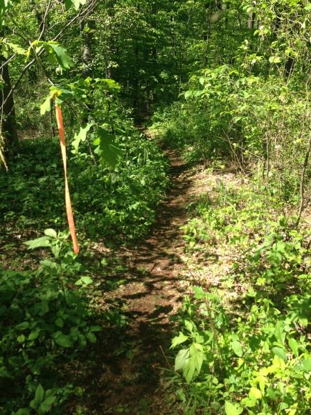 Charlie Horse Trail