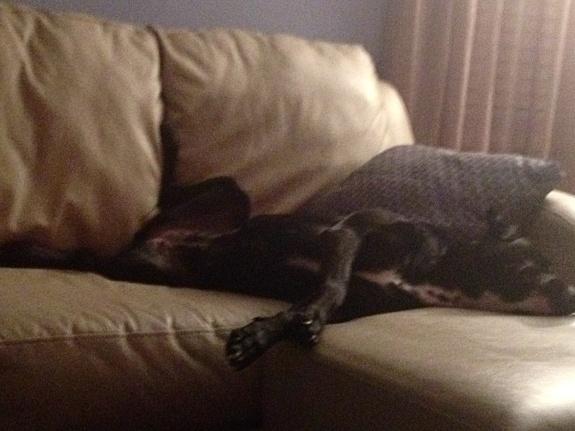 Corrina sleeping on couch