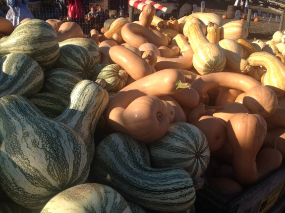 Gourds at Orchard