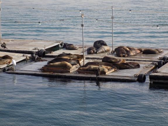 Seals on Harbor Cruise