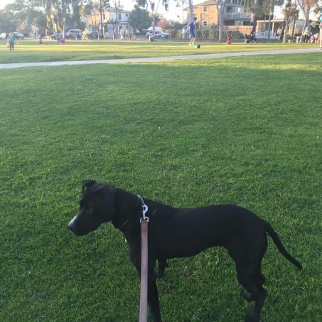 Walking Corrina to Park